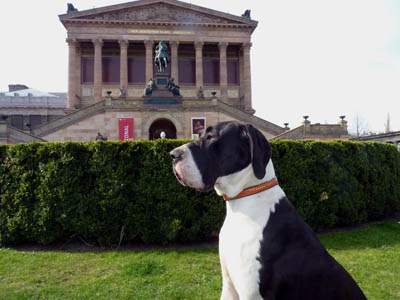 Deutsche Dogge Jana - Berlin Museumsinsel